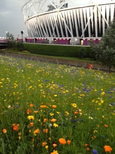 """London Olympics in Bloom"""
